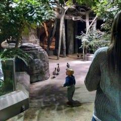 ACP-Zoo